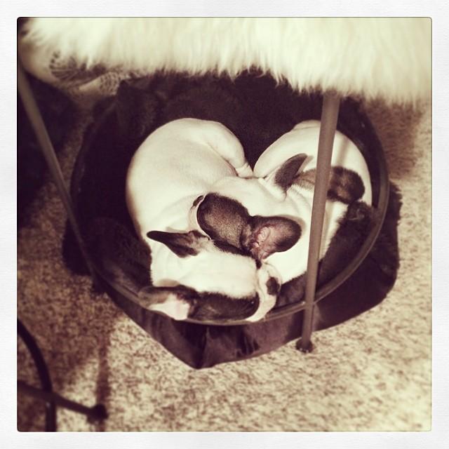 Puppies under my stool