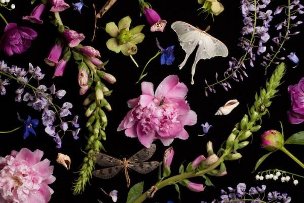 Paulette Tavormina, Botanicals