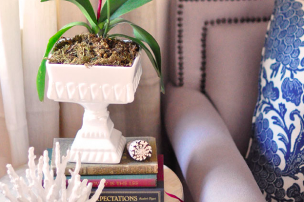 repotting and regrowing orchids