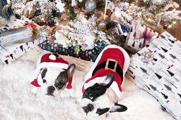 Merry Christmas Frenchies 4