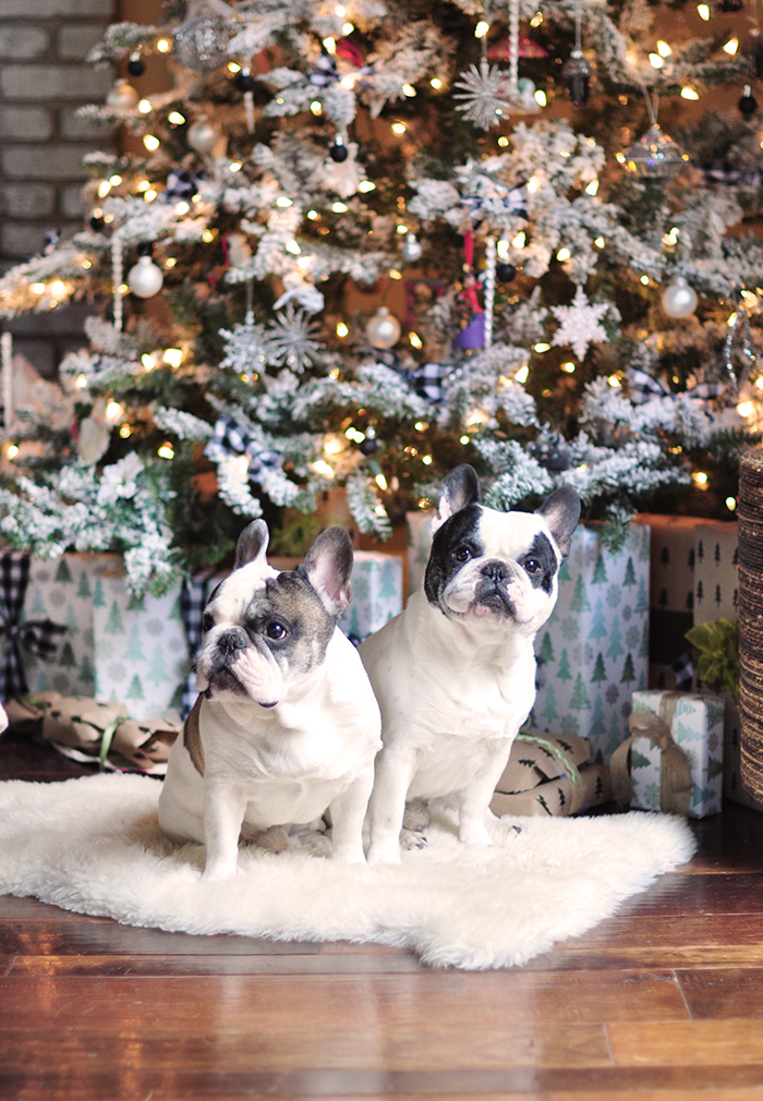 French Bulldogs in front of the Christmas Tree, holiday decorating trends and ideas