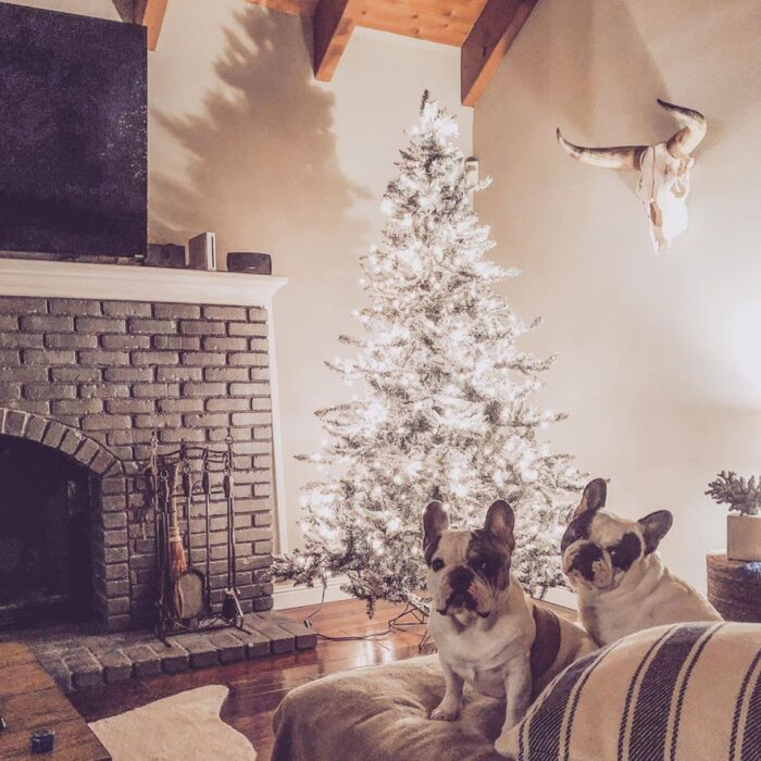 french bulldogs by the christmas tree