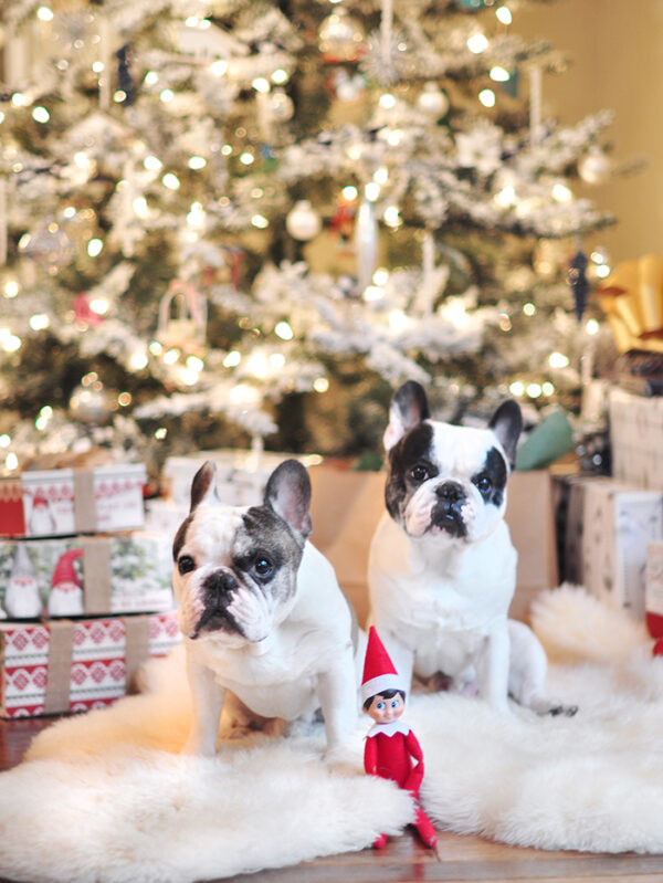 christmas frenchies 2020