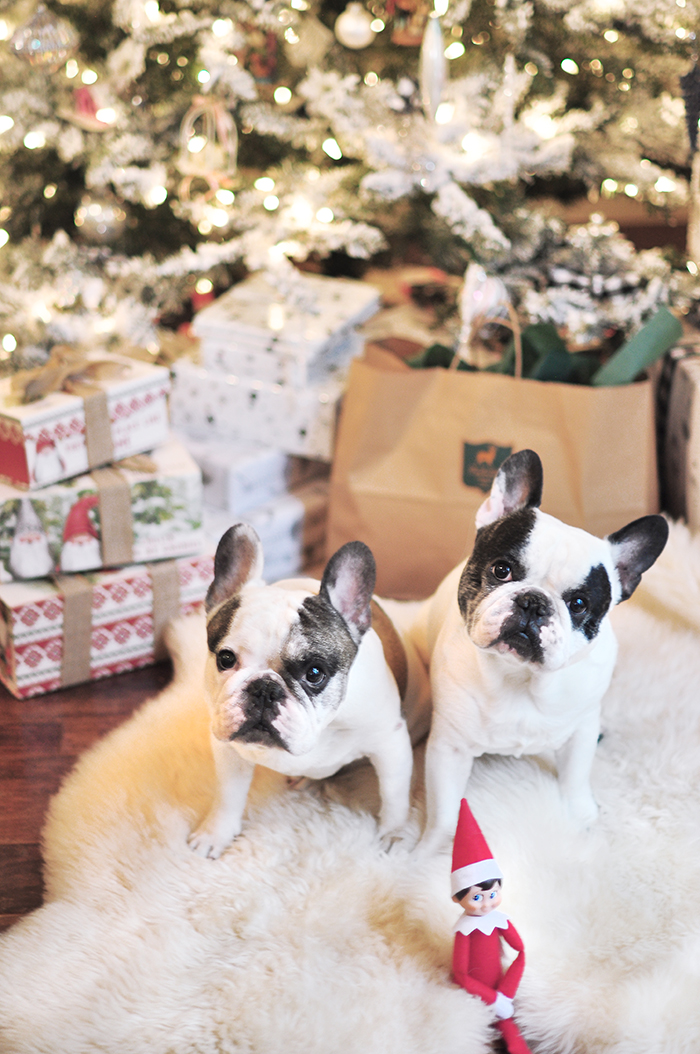 christmas frenchies by the tree 2020