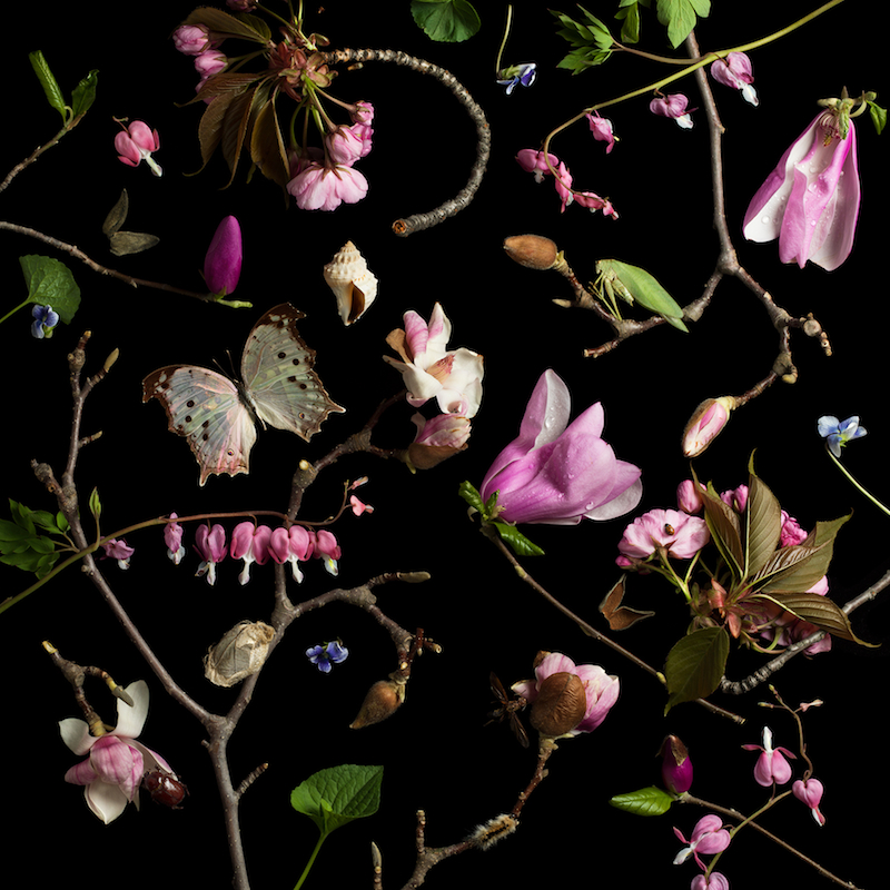 Paulette Tavormina, Botanical III (Bleeding Hearts and Magnolias), 2013