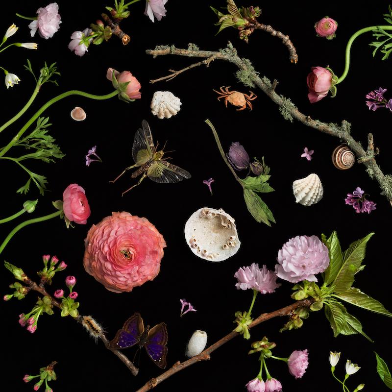 Paulette Tavormina, Botanical I (Cherry Blossoms), 2013
