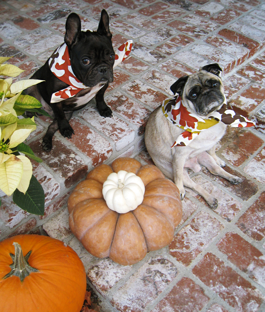 funny thanksgiving festive dogs