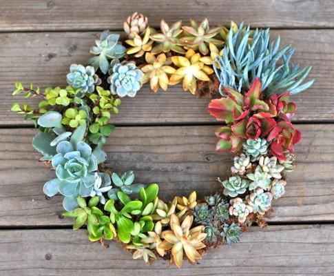 DIY Living Succulent Wreath