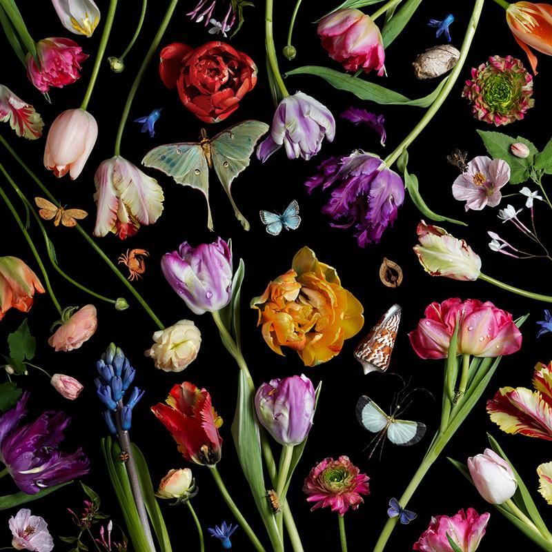 Paulette Tavormina, Botanical VII (Tulips), 2014