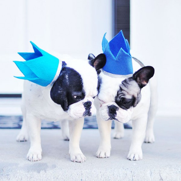 Birthday crowns for Frenchies -DIY Party hats