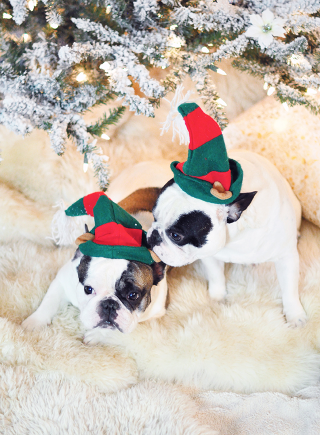christmas-dogs-under-the-tree
