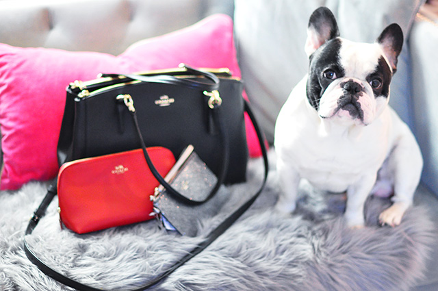 Coach bags with French Bulldog
