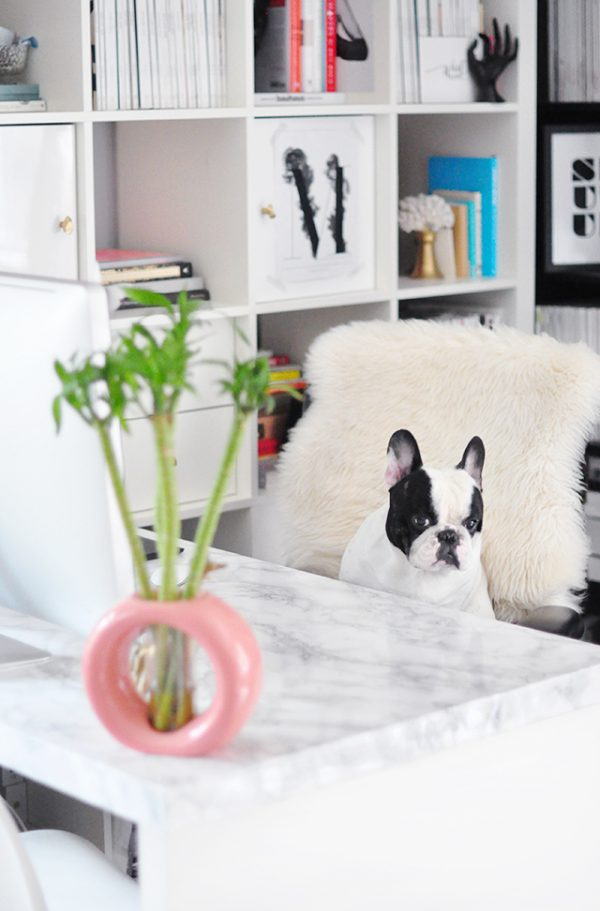 DIY Faux Marble Desk_marble desktop _french bulldog