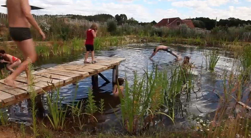 DIY Organic Pools-11