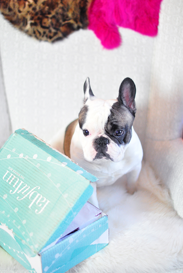 FabFitFun Box with French Bulldog_Winter 2015