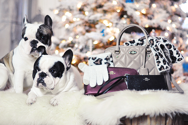 French Bulldogs and Coach bags_giveaway