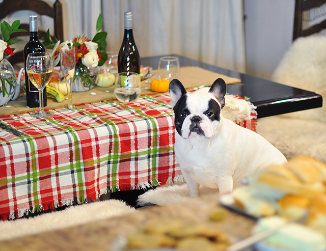 french-bulldog-at-the-table