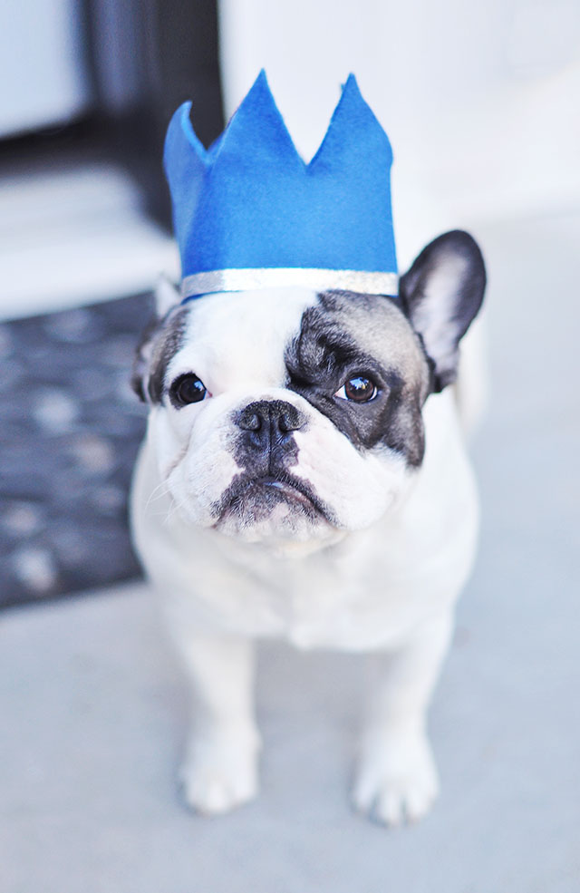 Frenchie with Crown