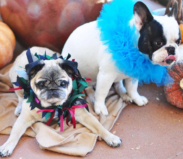 Halloween Pups