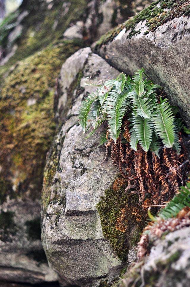 Heart Rock Trail - mossy rocks