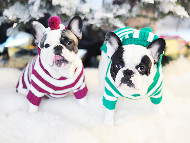 IG dogs in holiday sweaters