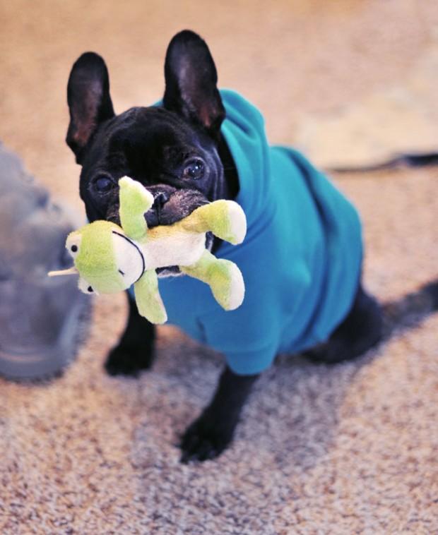 LeRoy Frenchie Frog Dog