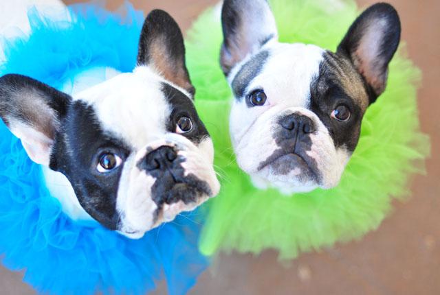 My Bo-Bos-puppies on Halloween