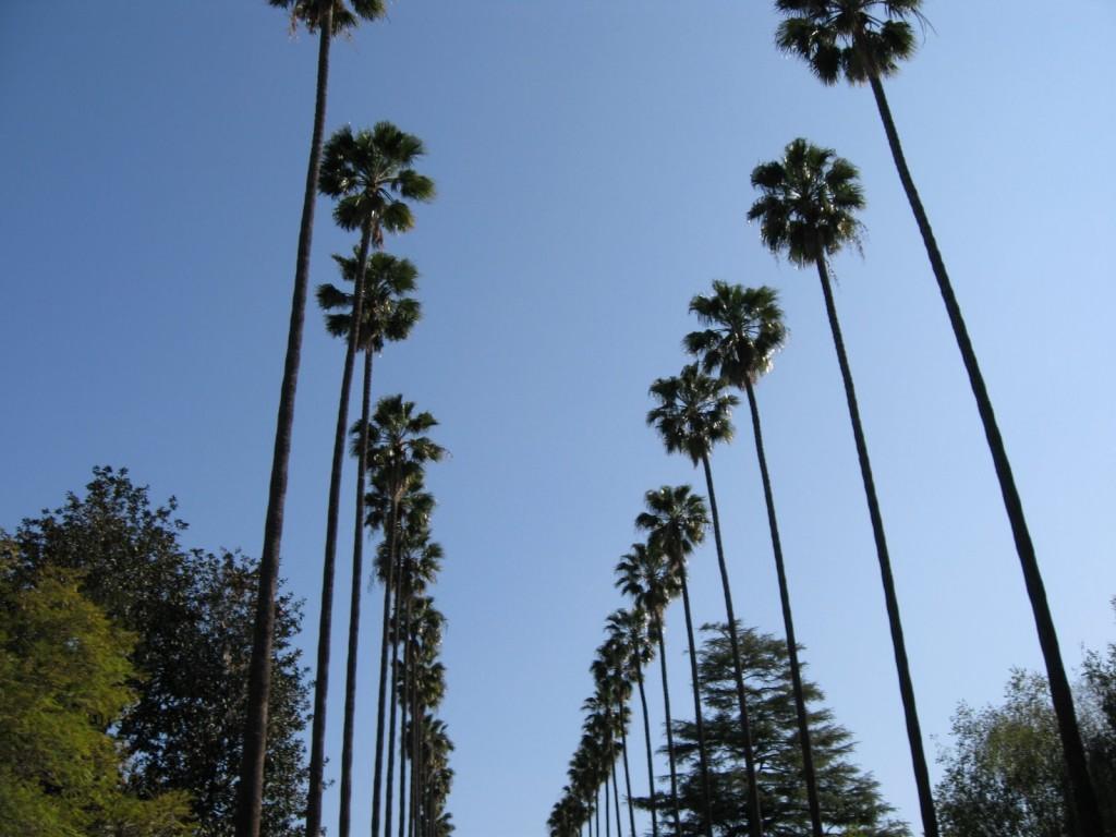 Palm-Trees-LA-Sherman-Oaks