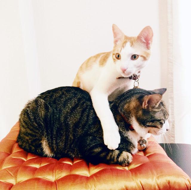 Pretty Cats on Pretty Tufted Cushion