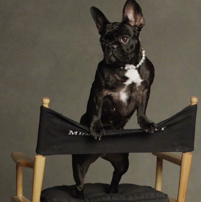 Lady Gaga's French Bulldog models for Coach Pups