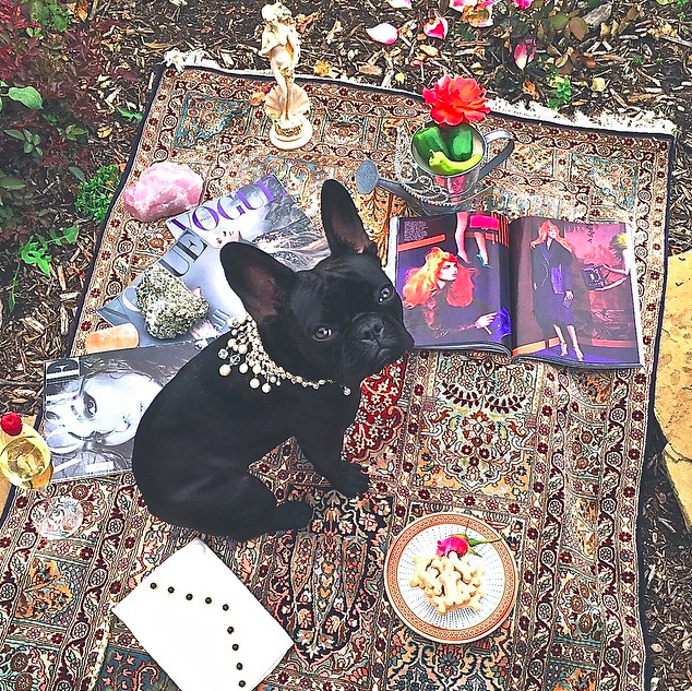 Lady Gaga's Frenchie Miss Asia Kinney