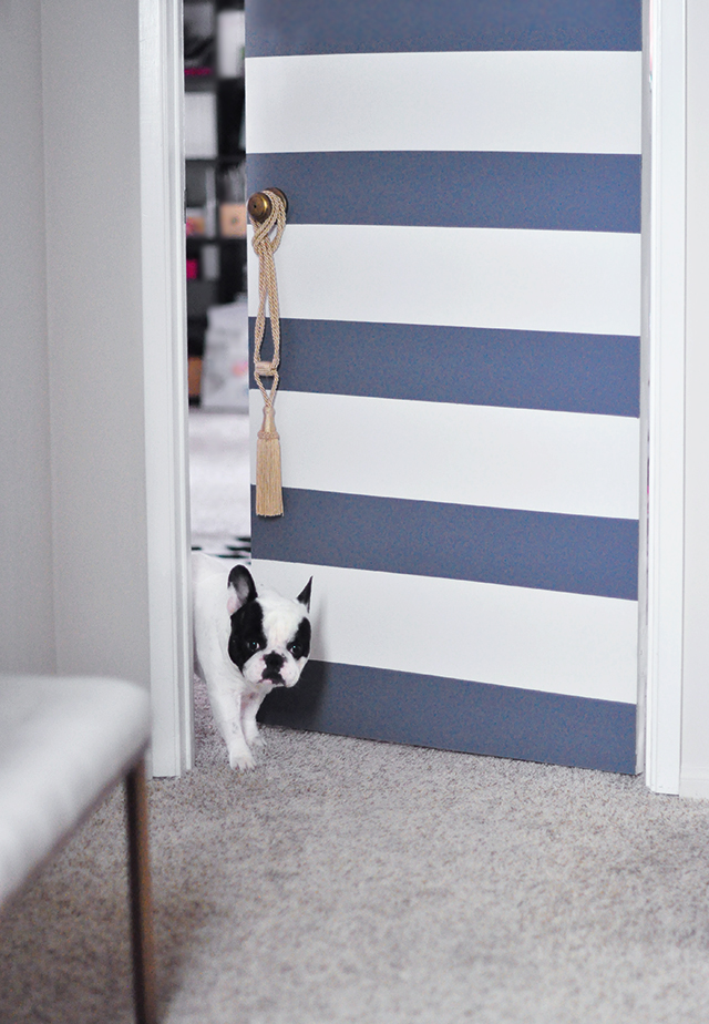 Striped office door with french bulldog