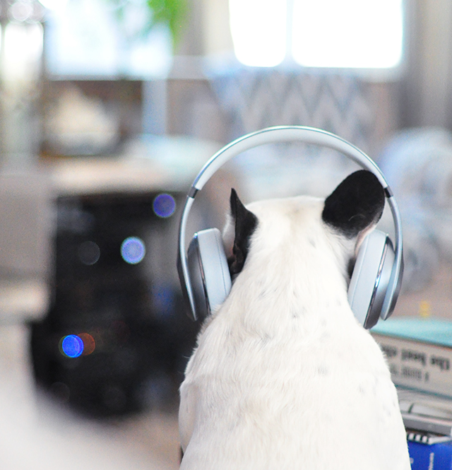Trevor_Beats by Dre_headphones on a dog series- 1