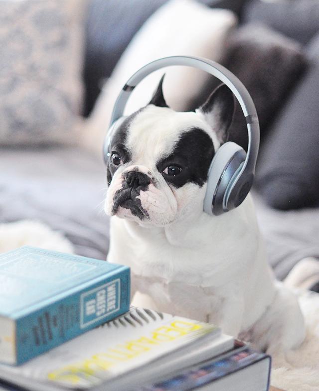 Trevor_Beats by Dre_headphones on a dog series-4