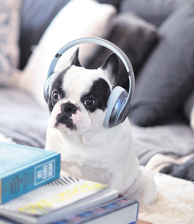 Trevor_Beats by Dre_headphones on a dog series-6