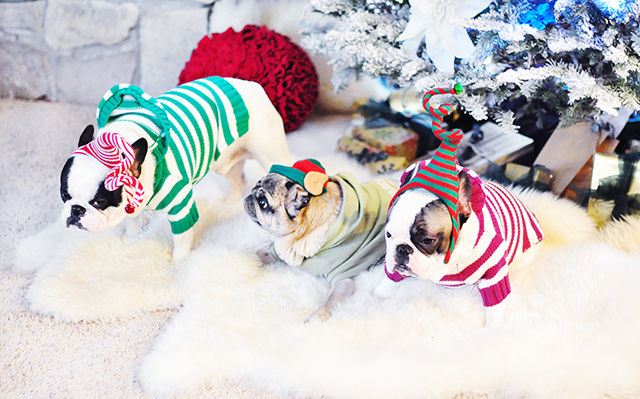 bah humbug  christmas dogs