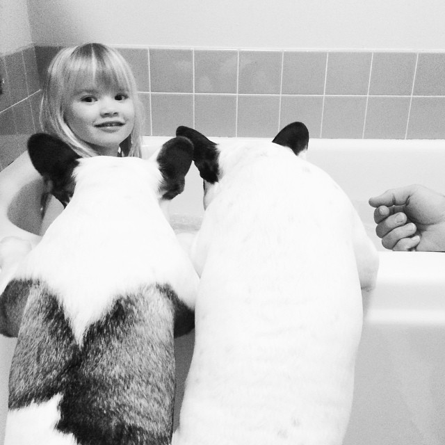 bath time with dogs