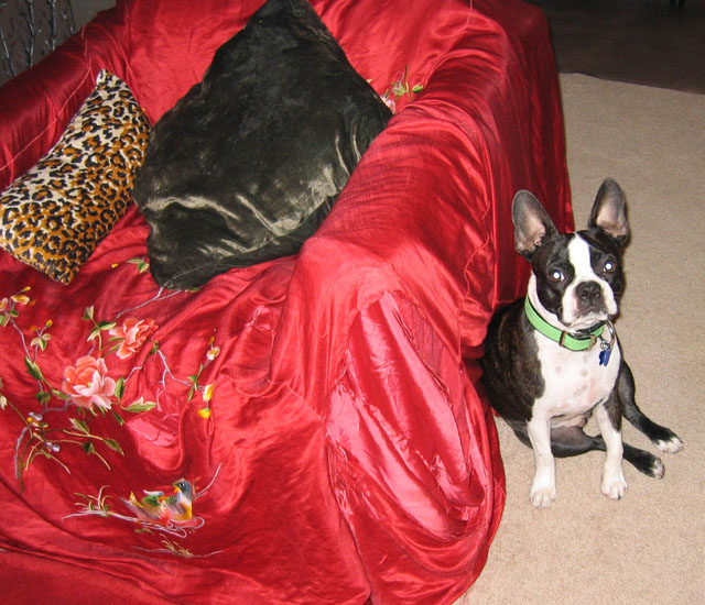 billy next to red silk throw