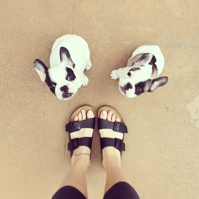 birkenstocks and puppies