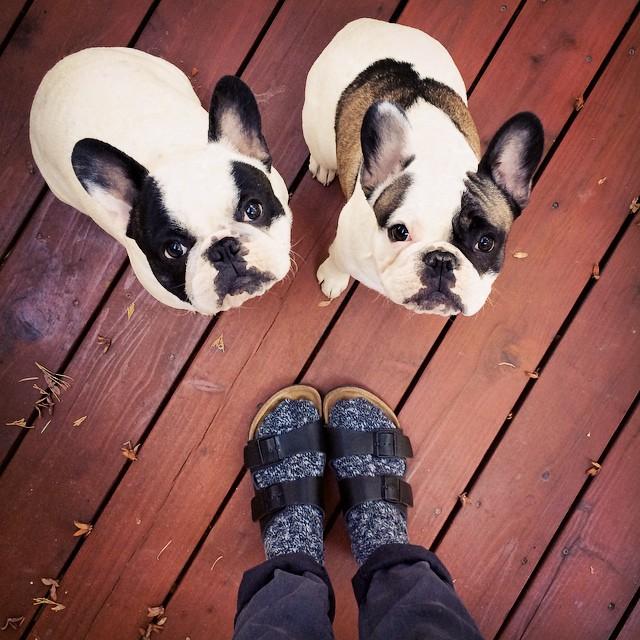 birkenstocks with socks