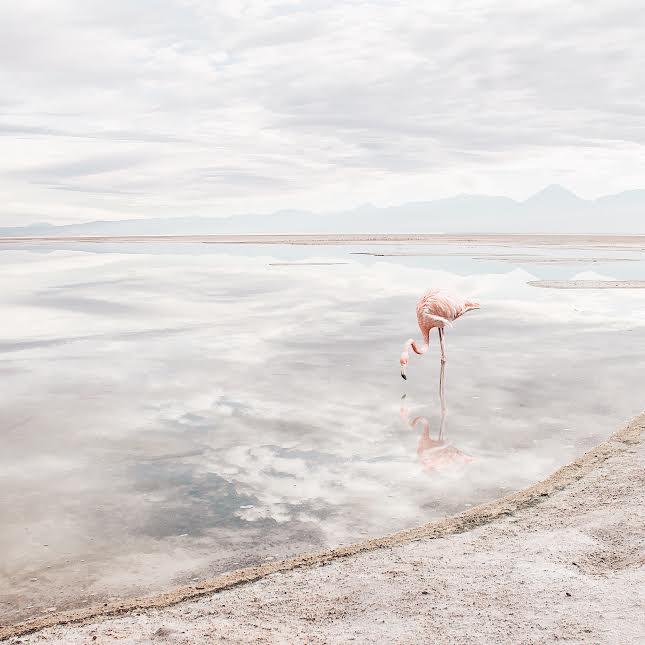 water sky reflection flamingo