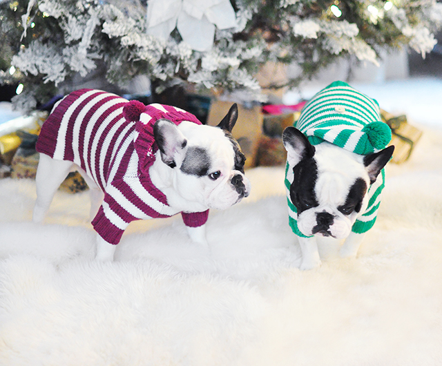 christmas dogs in holiday sweaters