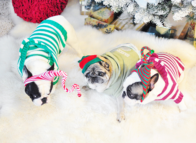 christmas sweater dogs
