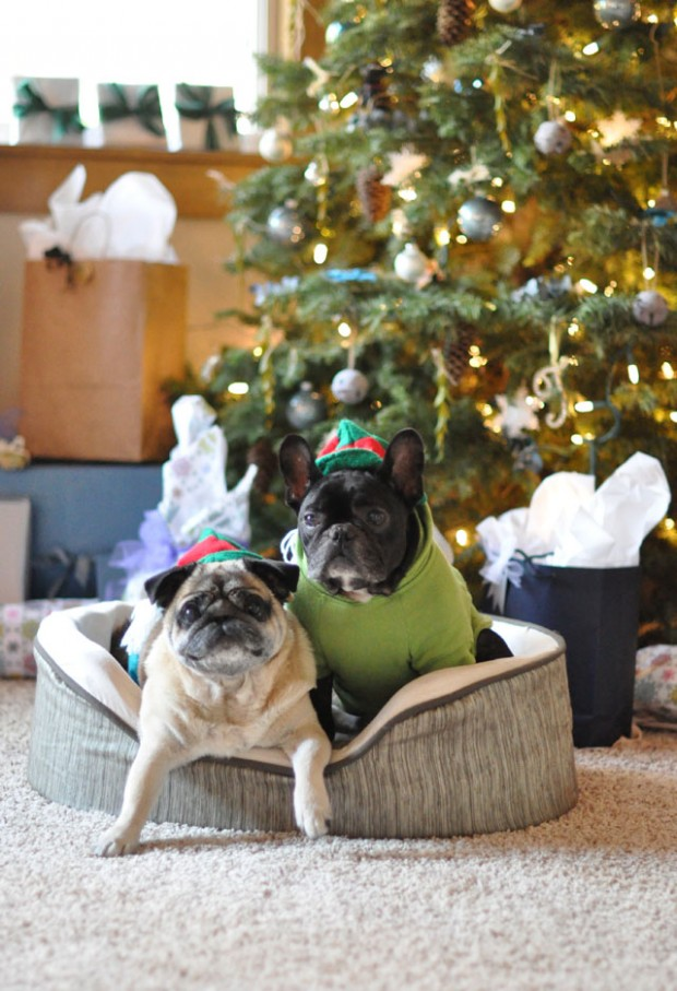 christms frenchie and pug elves