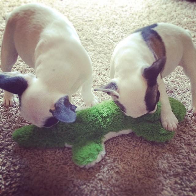crocodile hunters