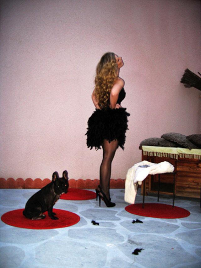 diy feather dress-french bulldog
