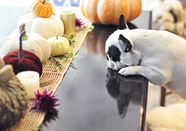 dog at the table -Thanksgiving Edition