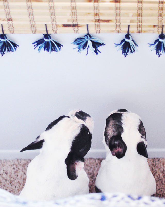 doggies looking at the tassels