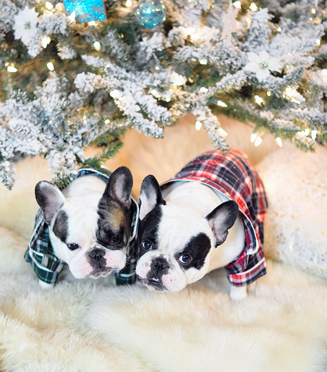 dogs-in-flannel-pajamas_french-bulldogs_christmas-tree