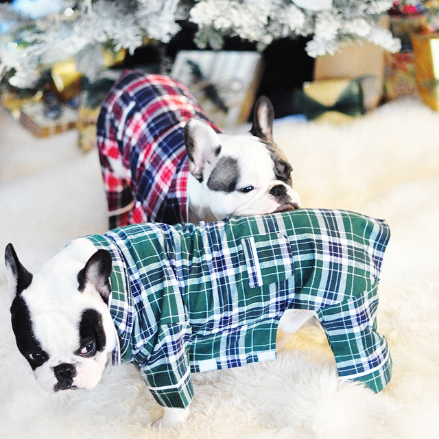 dogs in pajamas-french bulldogs